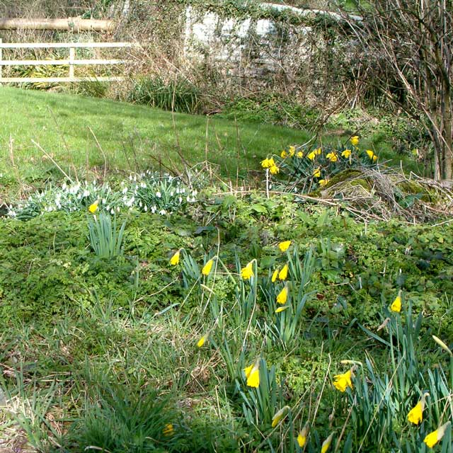 Snowdrops and hay meadow wildlife garden design in Barrow Gurney, near Bristol, Somerset